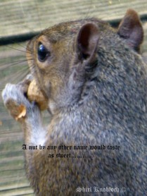 a nut