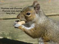peanuts and cheerios