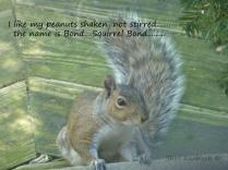squirrel bond